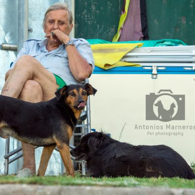 Adespota dogs