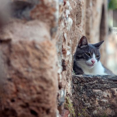 Cat photography outside