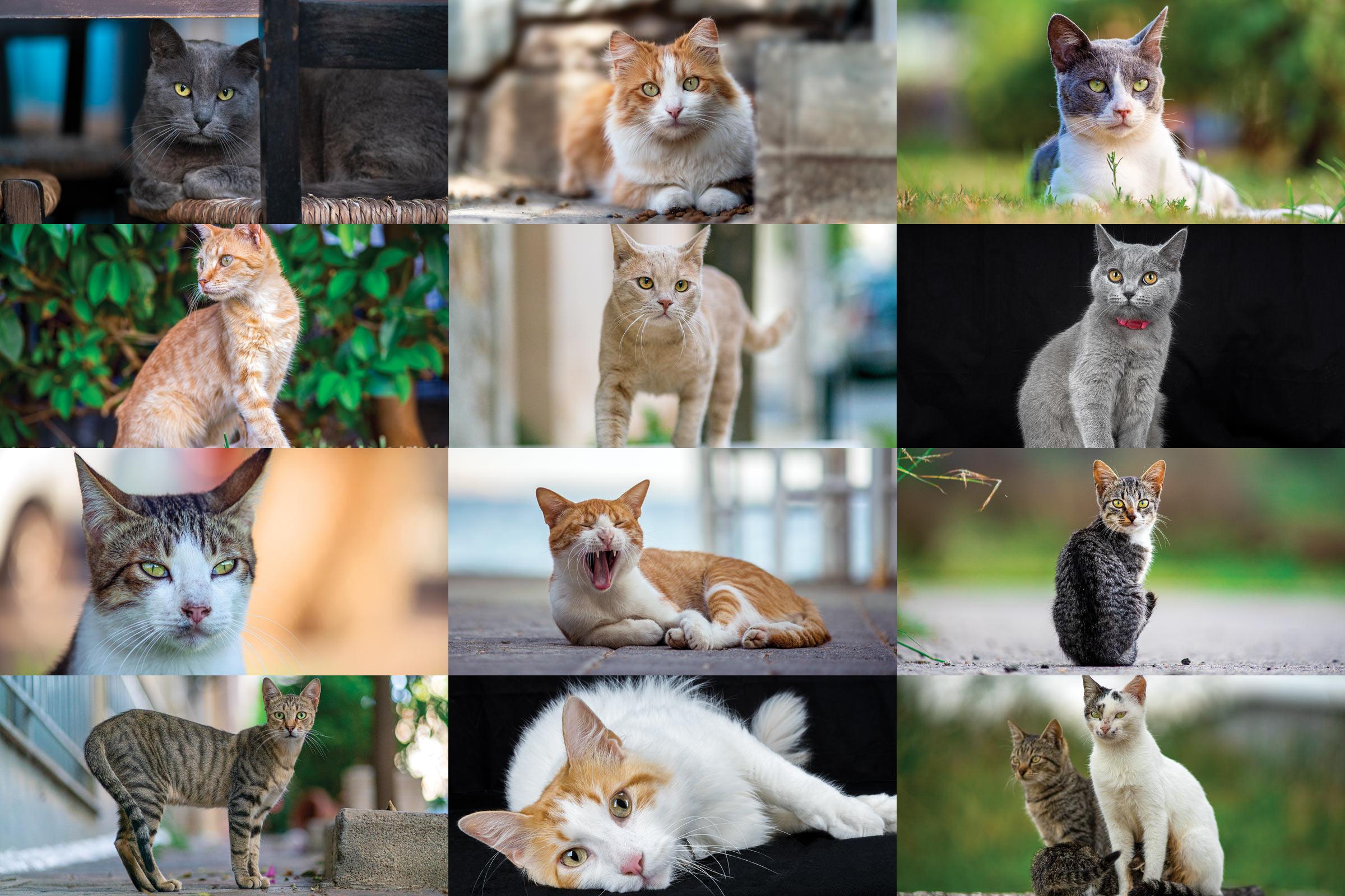 Petphotographygr cat calendar 2021